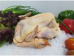 Kampong Chicken 1.2kg - 1.3kg