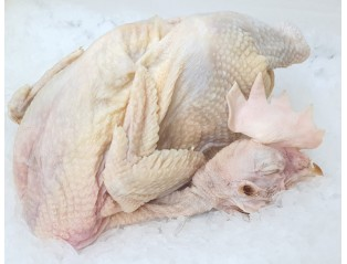Old Fowl Chicken (1.3kg-1.5kg)
